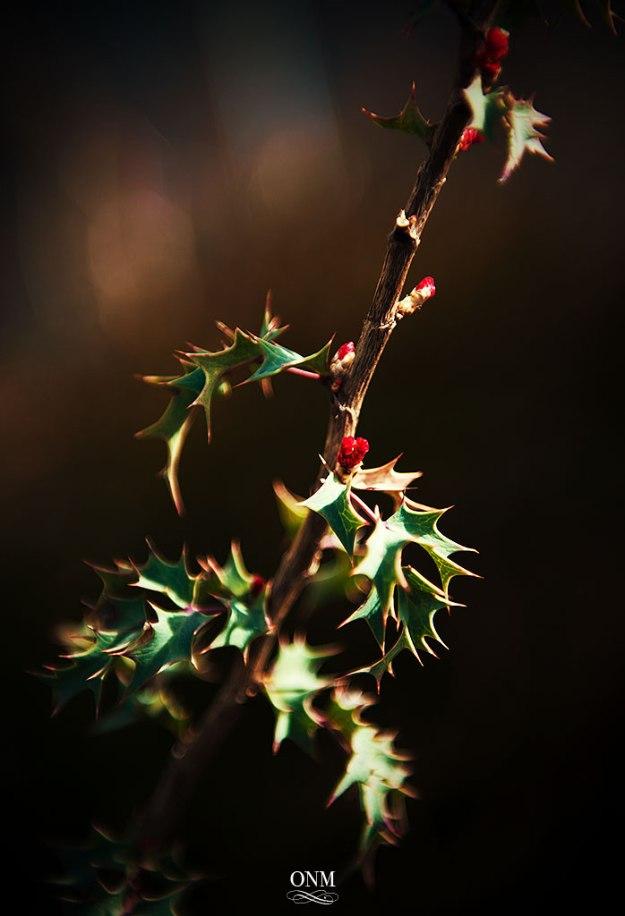 plantlife3