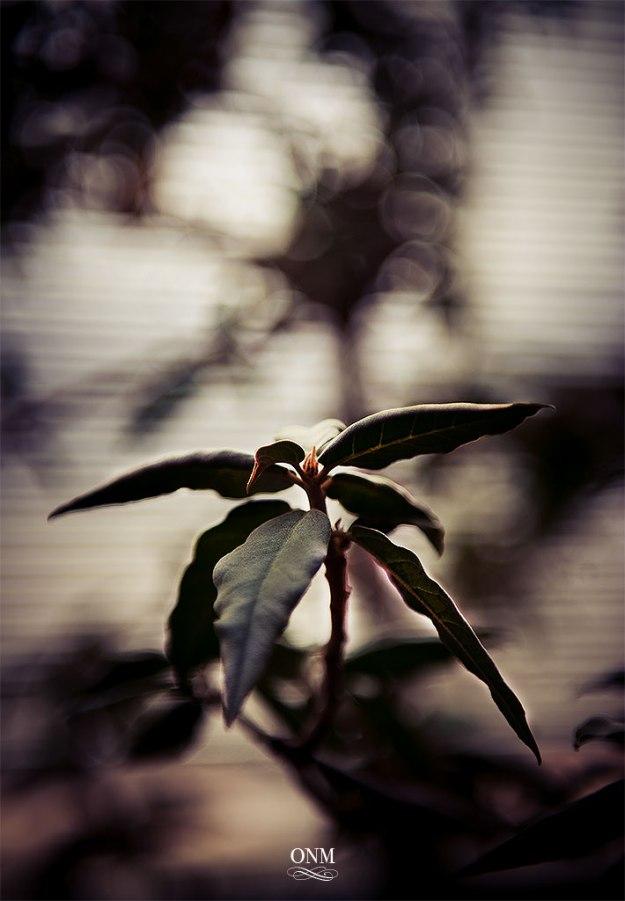 plantlife4